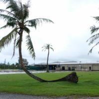typhoon vs. palm tree