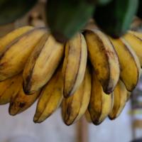 yum! bananas!